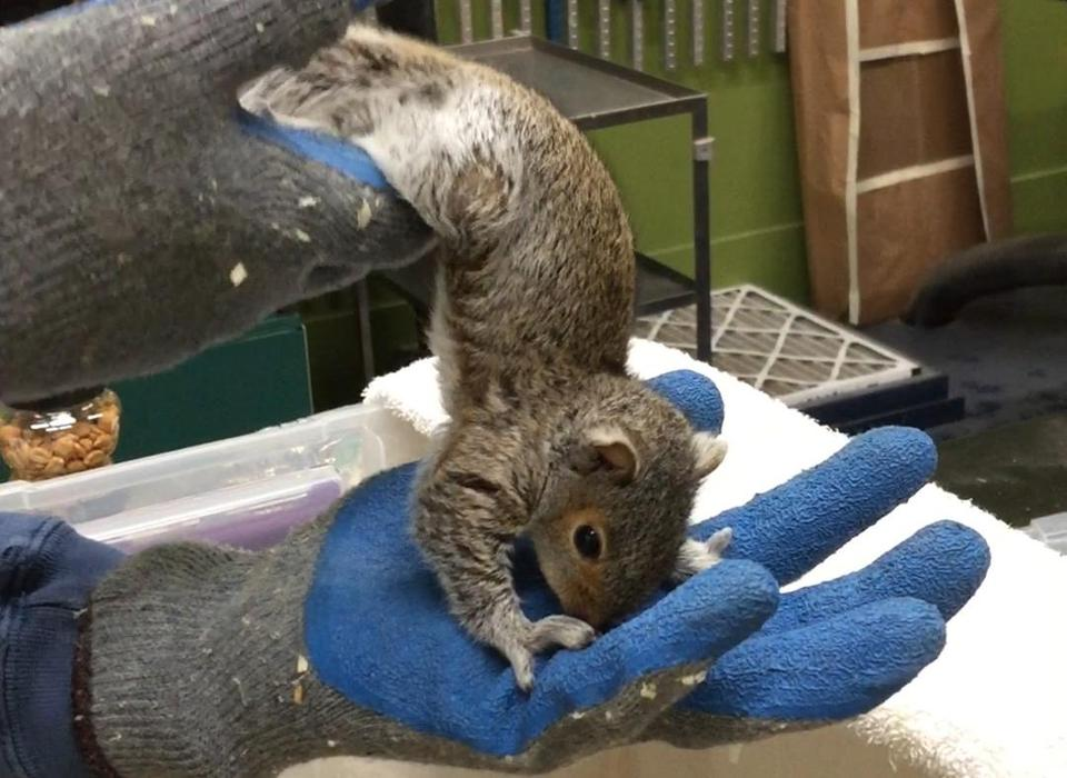 "Pepito the squirrel ""did not like physical therapy at all,"" Federico Erebia said."